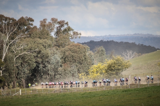 Women's Stage 3 Strade Nero Road Race 106kms Tour Of The King Valley.  Sat, Aug.  2015. Photo: Con Chronis